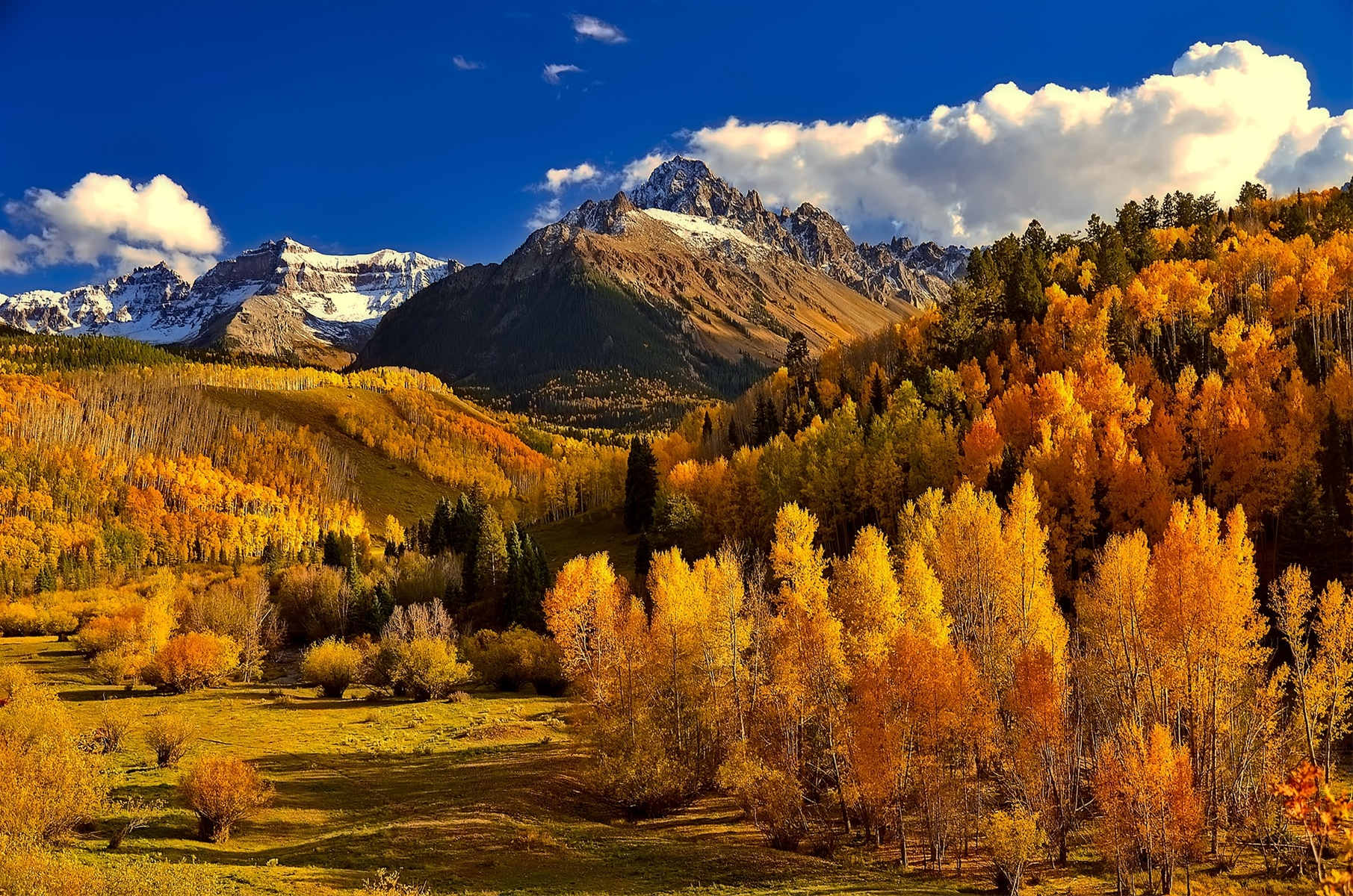 fall foliage near crested butte